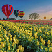 Hot Air Balloons Over Tulip Fields Art Print