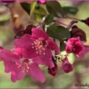 Hot Pink Blossoms Art Print