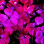 Hot Pink Florals Art Print