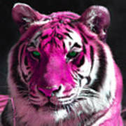 Hot Pink Tiger Art Print