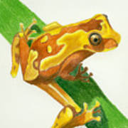 Hourglass Frog Art Print