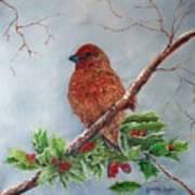 House Finch In Winter Art Print
