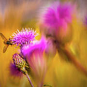 Hoverfly Thistle #g7 Art Print