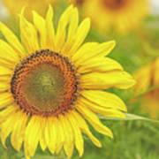 How Do You Dew, Sunflower Art Print