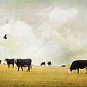 How Now Black Cow Art Print