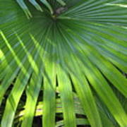Huge Palm Leaf Art Print