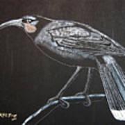 Huia Art Print