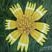 Huisache Daisy Art Print