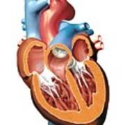Human Heart Anatomy, Artwork Art Print by Jose Antonio PeÑas