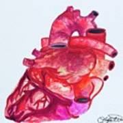Human Heart Pa Art Print