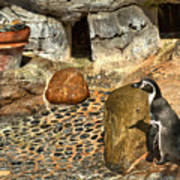 Humboldt Penguin 4 Art Print