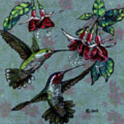 Hummers And Fuchsia Art Print