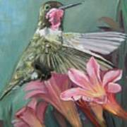 Humming Bird Anna Art Print