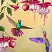Humming Birds And Fuchsia-jp2784 Art Print