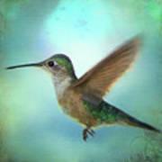 Hummingbird #2 Art Print