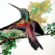 Hummingbird 5 Art Print