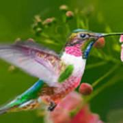 Hummingbird And Flower Painting Art Print