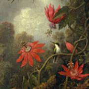 Hummingbird And Passionflowers Art Print