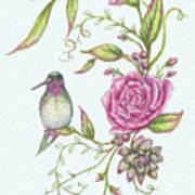 Hummingbird And Rose Art Print