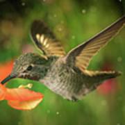 Hummingbird And The Monkey Flowers Art Print