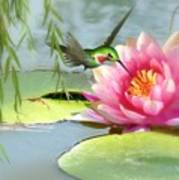 Hummingbird And Water Lily Art Print