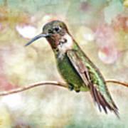 Hummingbird Art Art Print by Bonnie Barry