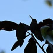 Hummingbird At Sunrise Silhouette Art Print