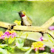 Hummingbird Attitude - Digital Paint 1 Art Print