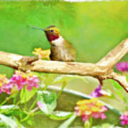 Hummingbird Attitude - Digital Paint 2 Art Print