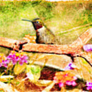 Hummingbird Attitude - Digital Paint 4 Art Print