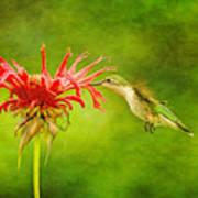 Hummingbird Bee Balm And Textures Art Print