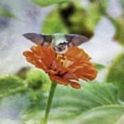 Hummingbird Bow Art Print