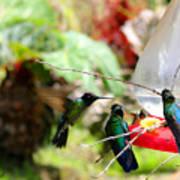 Hummingbird Close Encounter Art Print