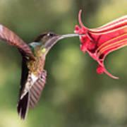 Hummingbird Enjoying Beautiful Flower Art Print
