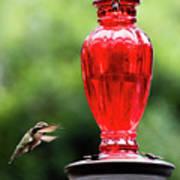 Hummingbird Feeder Art Print