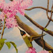 Hummingbird Feeding On Lilac Art Print