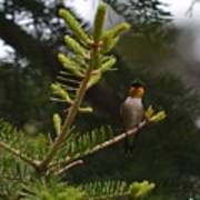 Hummingbird Flashing Art Print