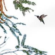Hummingbird In Flight Isolated On White Sky Art Print