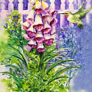 Hummingbird in Foxgloves  Art Print