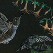 Hummingbird Parents Art Print