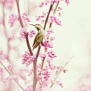 Hummingbird Perched Among Pink Blossoms Art Print