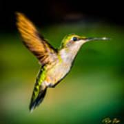 Hummingbird Sparkle Art Print