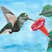 Hummingbird Trumpet Art Print