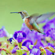 Hummingbird Visiting Violets Art Print