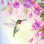 Hummingbird With Fuchsia Print by Leona Jones