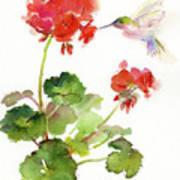 Hummingbird With Geranium Art Print