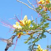 Hummingbird With Honeysuckle Art Print