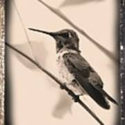 Hummingbird With Old-fashioned Frame 3 Art Print