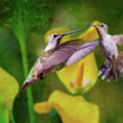 Hummingbirds In Virginia Art Print