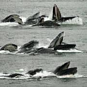 Humpback Whale Bubble-net Feeding Sequence X5 V2 Art Print